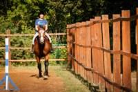 Новые лошади для конной полиции в Центральном парке, Фото: 1