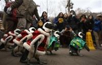 Рождественские пингвины, Фото: 1