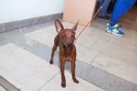 Выставка собак в Туле, 29.11.2015, Фото: 122