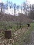 «Тульское землячество» высадило молодые деревья в музее-усадьбе «Дворяниново», Фото: 11