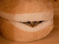 Котамбургер, Фото: 2