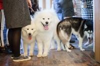 Выставка собак в Туле, 29.11.2015, Фото: 24