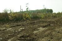 Высадка деревьев на территории бывшей судаковской свалки, Фото: 1