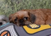 Выставка собак DogLand, Фото: 16
