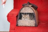 Международная выставка кошек. 16-17 апреля 2016 года, Фото: 4