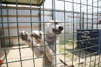 Зоопарк на набережной Упы в Туле, Фото: 19