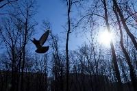 Солнечный день в Белоусовском парке, Фото: 27