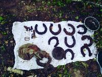 В Тульской области в лесу поисковики нашли захоронение артиллеристов и лошадей, Фото: 3