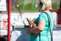 Чемпионат Тульской области по стритлифтингу, Фото: 50