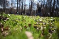 Посадка деревьев в Комсомольском парке, Фото: 46