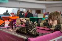 Выставка кошек в ГКЗ. 26 марта 2016 года, Фото: 75