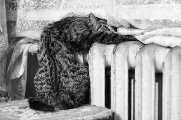 Моя мерзлявая котейка :)