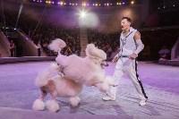 Туляков приглашают на новогоднее представление «Ёлка в цирке», Фото: 46
