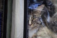 В Туле прошла выставка «Пряничные кошки» , Фото: 37