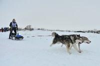 Праздник северных собак на Куликовом поле , Фото: 85