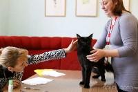 Выставка кошек, Фото: 17