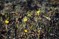 Весна 2020 в Туле: трели птиц и первые цветы, Фото: 7