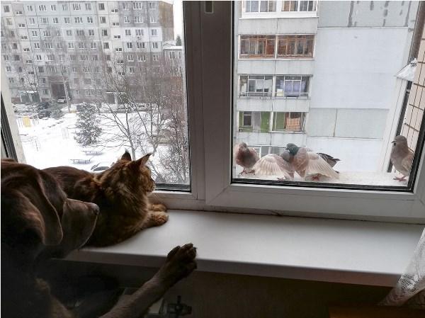 """Реалити шоу - """"За окном"""".."""