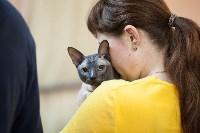 В Туле прошла выставка «Пряничные кошки» , Фото: 120