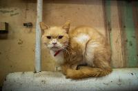 Волонтеры спасли кошек из адской квартиры, Фото: 43