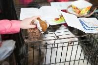 Выставка собак в Туле, 29.11.2015, Фото: 52