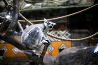Тульский экзотариум: животные, Фото: 18