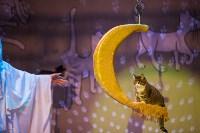 Театр кошек в ГКЗ, Фото: 72