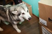 Выставка собак в Туле, 29.11.2015, Фото: 71