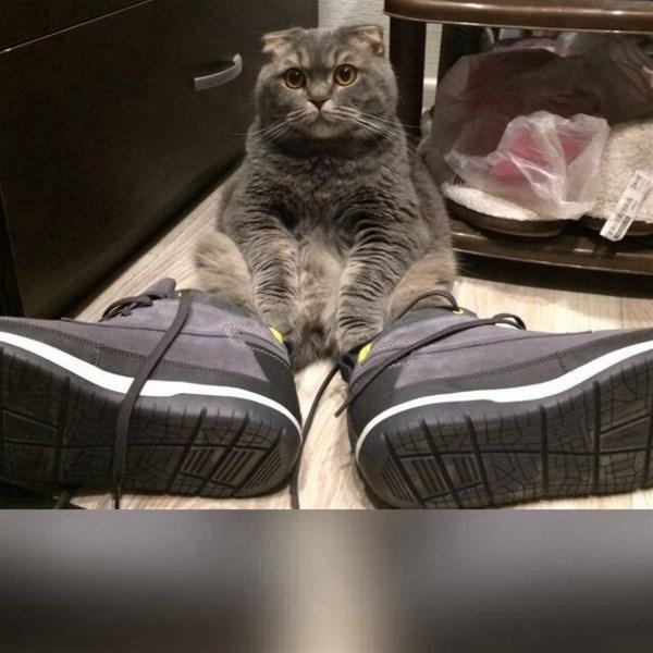 ...нассать в хозяйскую обувь много ума не надо....а вот зашнуровать....
