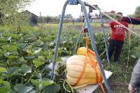 Гигантские тыквы из урожая семьи Колтыковых, Фото: 27
