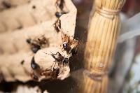 Животные: груминг и ветклиники, Фото: 14