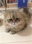 Грустный кот, Фото: 4