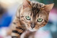 Выставка кошек в МАКСИ, Фото: 61