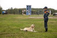 Испытания кинологов в Тульском спасательном центре, Фото: 56