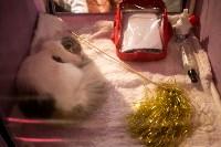 Пряничные кошки, Фото: 60
