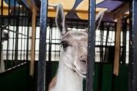 Цирк Гии Эрадзе в Туле, Фото: 18