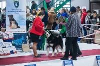 Выставка собак в Туле, Фото: 87