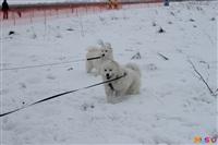 Куликово поле. Гонки на собачьих упряжках., Фото: 122