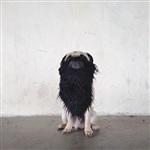 Фотогеничный пес Норм из Сиэтла, Фото: 3