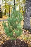 В Центральном парке Тулы появился сосновый бор «Слободы», Фото: 36