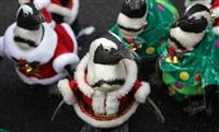 Рождественские пингвины, Фото: 5