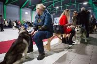 Выставка собак в Туле, Фото: 5