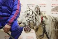 """Цирк """"Максимус"""" и тигрица в гостях у Myslo, Фото: 18"""