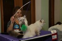 Выставка кошек. 21.12.2014, Фото: 11
