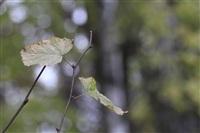 Осень, Фото: 16