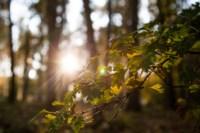 Центральный парк, утро, осень, Фото: 29