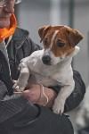 Выставка собак в Туле 26.01, Фото: 75