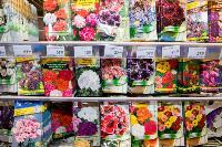 Какие семена выбрать и как правильно ухаживать за рассадой, Фото: 27