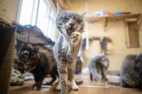 Волонтеры спасли кошек из адской квартиры, Фото: 65