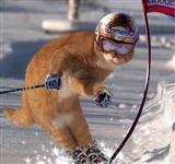 Олимпийские котики, Фото: 3